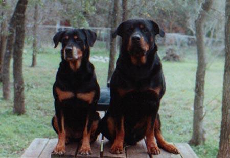 Bandit & Maggie